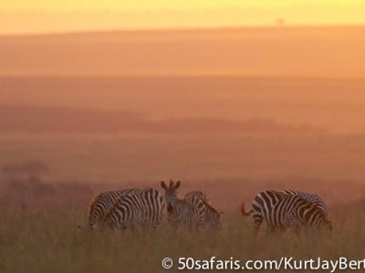 Last light zebra