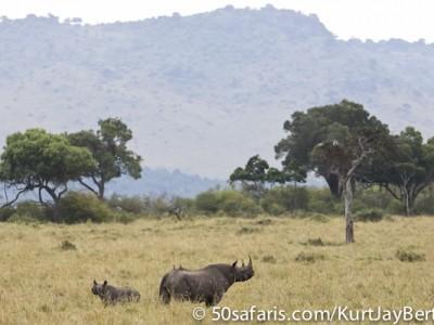 Black rhino and calf in the Masai Mara