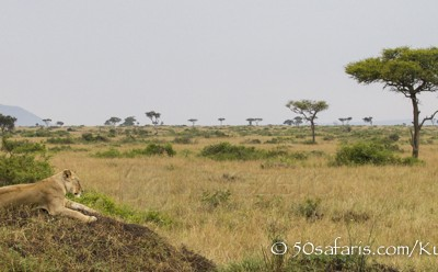 Kenya, great migration, migration, kill, wildebeest, calendar, crocodile, when to go, best, wildlife, safari, photo safari, photo tour, photographic safari, photographic tour, photo workshop, wildlife photography, 50 safaris, 50 photographic safaris, kurt jay bertels, lioness, lion, termite mound, africa
