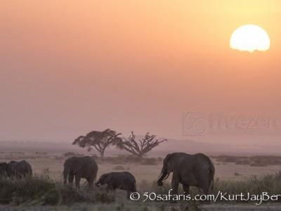 Kenya, great migration, migration, kill, wildebeest, calendar, crocodile, when to go, best, wildlife, safari, photo safari, photo tour, photographic safari, photographic tour, photo workshop, wildlife photography, 50 safaris, 50 photographic safaris, kurt jay bertels, elephant, herd, swimming, feeding, amboseli, amboseli national park, sunset, sun