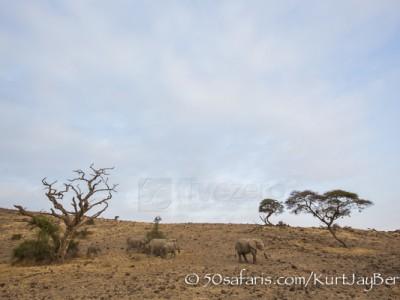 Kenya, great migration, migration, kill, wildebeest, calendar, crocodile, when to go, best, wildlife, safari, photo safari, photo tour, photographic safari, photographic tour, photo workshop, wildlife photography, 50 safaris, 50 photographic safaris, kurt jay bertels, amboseli, amboseli national park, elephant, young, male, calf, herd, desert
