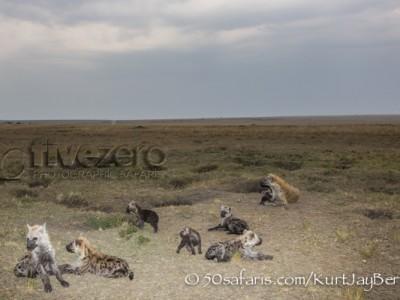Kenya, great migration, migration, kill, wildebeest, calendar, crocodile, when to go, best, wildlife, safari, photo safari, photo tour, photographic safari, photographic tour, photo workshop, wildlife photography, 50 safaris, 50 photographic safaris, kurt jay bertels, hyaena, spotted hyaena, cub, pup, cute, den, den site