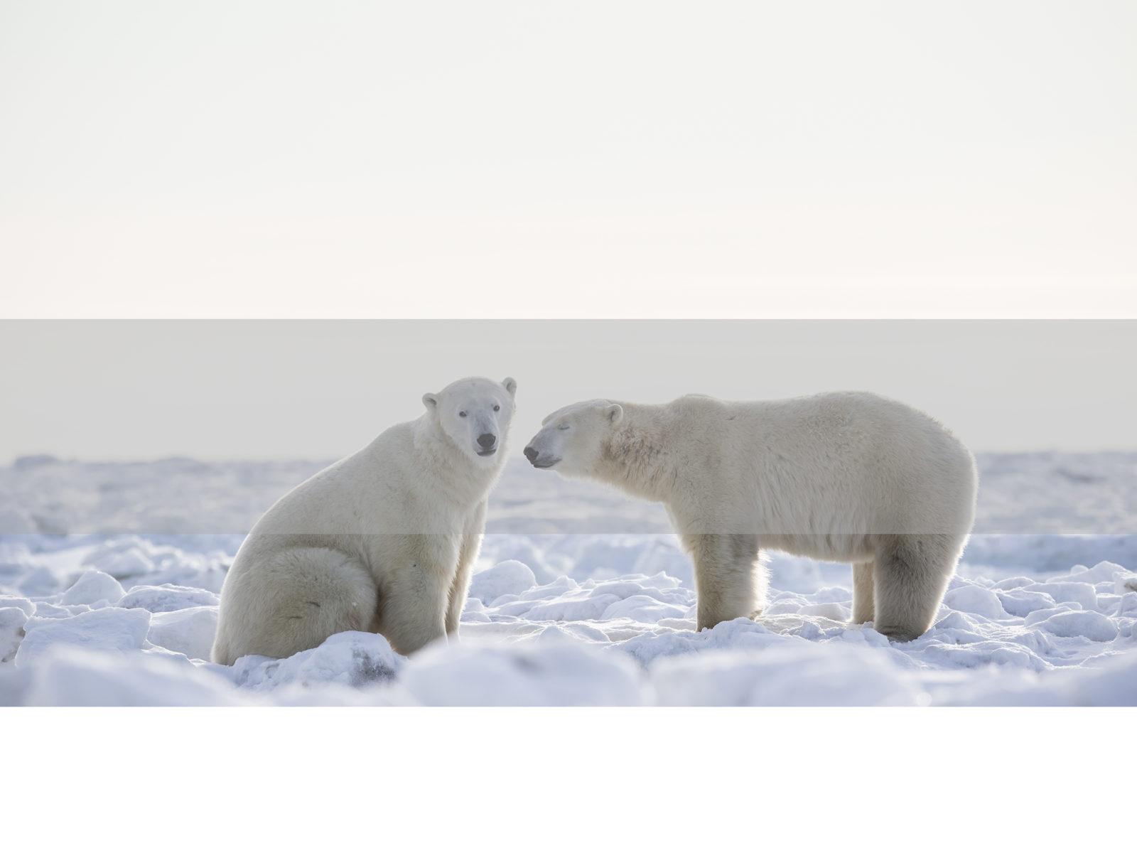 Polar Bear Safari, FiveZero safaris