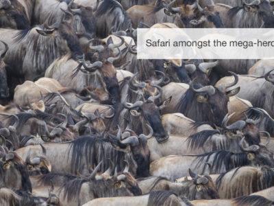 Great migration safari, fivezero safaris