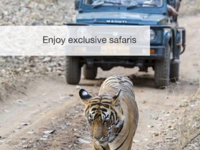 tiger safari, fivezero safaris