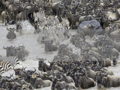 Permalink to The Great Migration Safari in Kenya