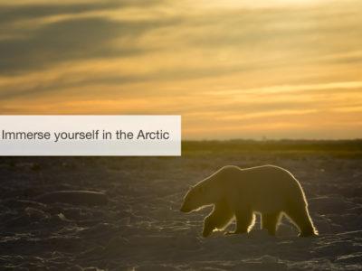 Polar bear safari, five zero safaris