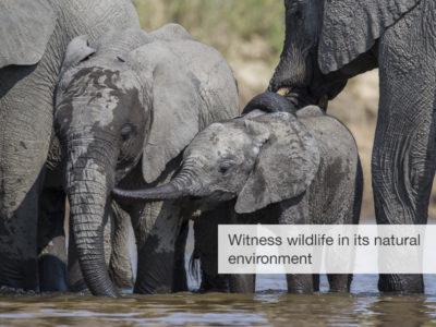 South Africa safari, five zero safaris