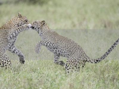 Permalink to The Predators Safari in South Africa