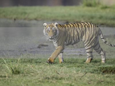 Permalink to The Tiger Safari in India