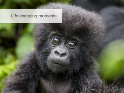 Gorilla safari, fivezero safaris
