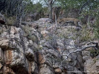 calendar, when to go, best, wildlife, safari, photo safari, photo tour, photographic safari, photographic tour, photo workshop, wildlife photography, five zero safaris, five zero photographic safaris, fivezero, kurt jay bertels, tiger safari, india, leopard