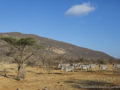 photo safari, photographic safari, wildlife photographic safari, photo tour, photo workshop, when to go, best, fivezero safaris, five zero, safari, kurt jay bertels, kenya, samburu, grevys zebra