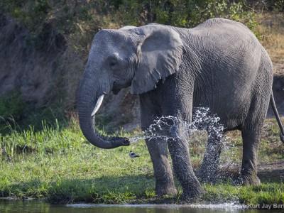 photo safari, photographic safari, wildlife photographic safari, photo tour, photo workshop, when to go, best, fivezero safaris, five zero, safari, kurt jay bertels, south africa, kruger national park, sari sands, elephant, drinking