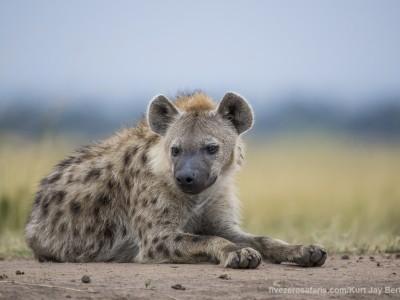 spotted hyena, hyena, photo safari, photographic safari, wildlife photographic safari, photo tour, photo workshop, when to go, best, fivezero safaris, five zero, safari, kurt jay bertels, kenya, masai mara,