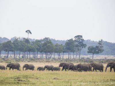 elephants, photo safari, photographic safari, wildlife photographic safari, photo tour, photo workshop, when to go, best, fivezero safaris, five zero, safari, kurt jay bertels, kenya, masai mara,