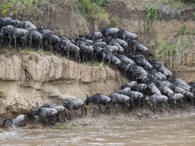 wildebeest, crossing, mara river, photo safari, photographic safari, wildlife photographic safari, photo tour, photo workshop, when to go, best, fivezero safaris, five zero, safari, kurt jay bertels, kenya, masai mara,