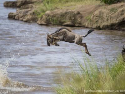 photo safari, photographic safari, wildlife photographic safari, photo tour, photo workshop, when to go, best, fivezero safaris, five zero, safari, kurt jay bertels, kenya, masai mara, great migration, wildebeest