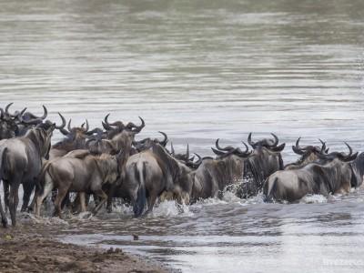 photo safari, photographic safari, wildlife photographic safari, photo tour, photo workshop, when to go, best, fivezero safaris, five zero, safari, kurt jay bertels, kenya, masai mara, great migration, wildebeest, river crossings