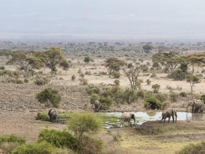 elephants, photo safari, photographic safari, wildlife photographic safari, photo tour, photo workshop, when to go, best, fivezero safaris, five zero, safari, kurt jay bertels, kenya, amboseli, amboseli national park