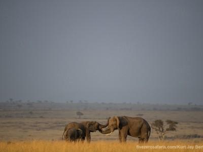 elephants, photo safari, photographic safari, wildlife photographic safari, photo tour, photo workshop, when to go, best, fivezero safaris, five zero, safari, kurt jay bertels, kenya, masai mara, great migration,