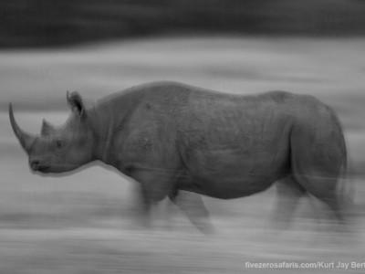 black rhino, photo safari, photographic safari, wildlife photographic safari, photo tour, photo workshop, when to go, best, fivezero safaris, five zero, safari, kurt jay bertels, kenya, masai mara, great migration,