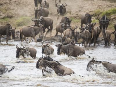 photo safari, photographic safari, wildlife photographic safari, photo tour, photo workshop, when to go, best, fivezero safaris, five zero, safari, kurt jay bertels, kenya, masai mara, great migration, wildebeest, river crossing