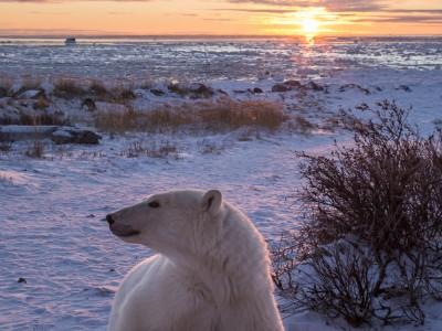 photo safari, photographic safari, wildlife photographic safari, photo tour, photo workshop, when to go, best, fivezero safaris, five zero, safari, kurt jay bertels, canada, churchill, polar bear, sunrise, sunset