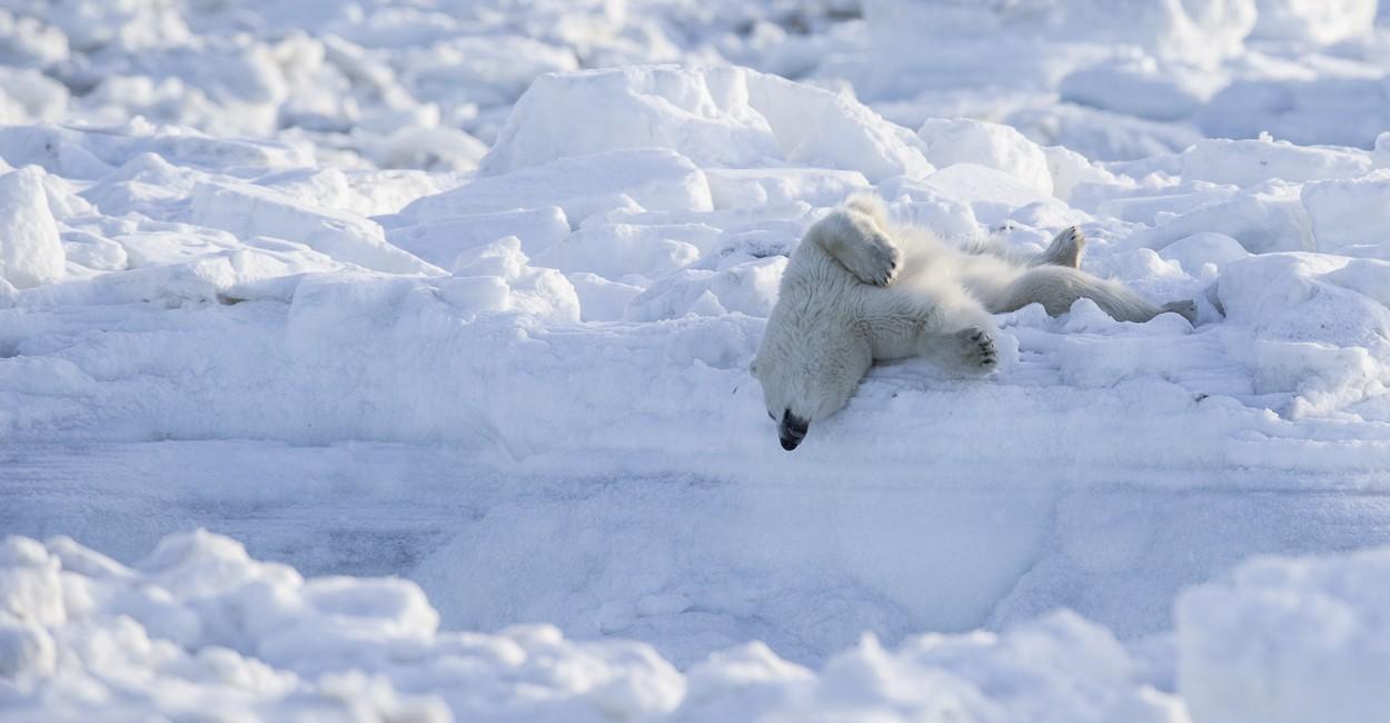 Permalink to The Polar Bear Safari 2015: Day 2