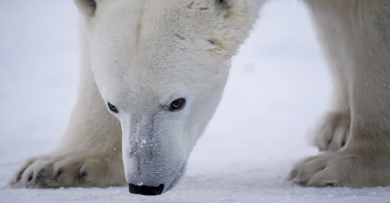 Permalink to The Polar Bear Safari 2015: Day 1