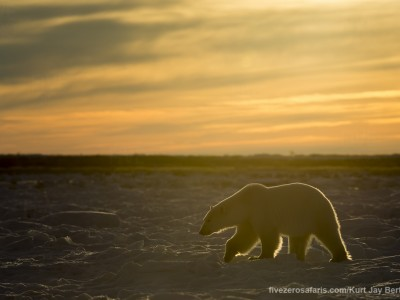 photo safari, photographic safari, wildlife photographic safari, photo tour, photo workshop, when to go, best, fivezero safaris, five zero, safari, kurt jay bertels, canada, churchill, polar bear,