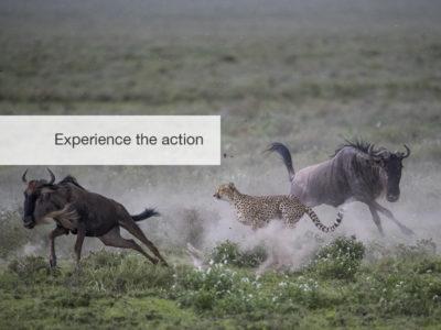cheetah safari, fivezero safaris