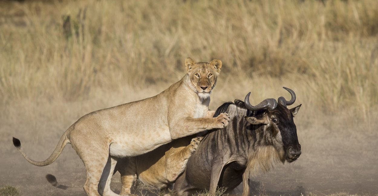 Permalink to The Great Migration Safari – September 2016