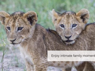 Phinda Safari, South Africa, FiveZero Safaris