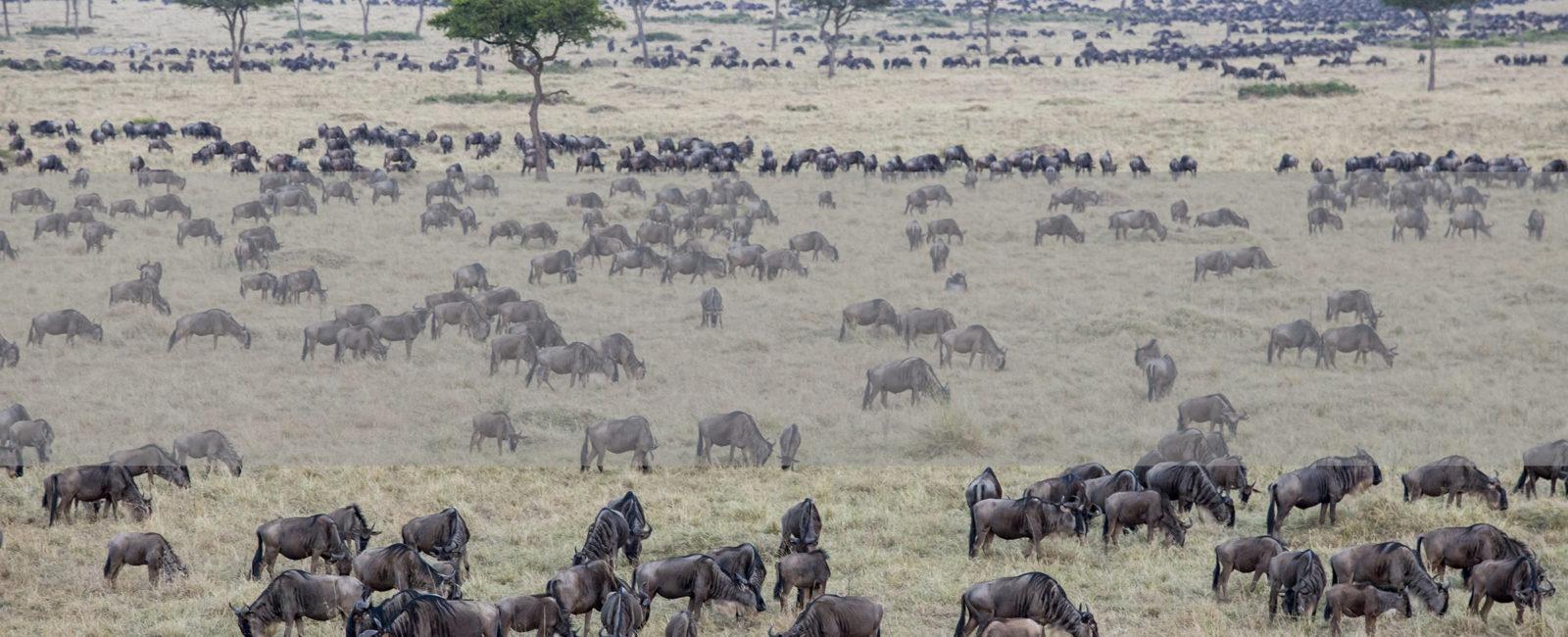 Kenya, Masai Mara, Safari, FiveZero Safaris
