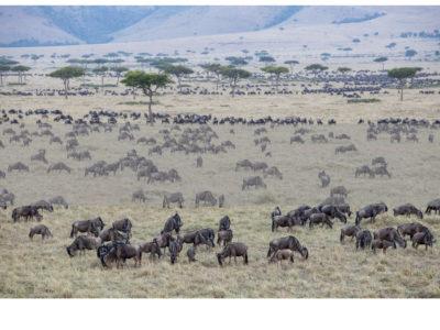 Permalink to The Masai Mara Safari in Kenya