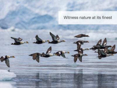 The Arctic Safari, FiveZero Safaris