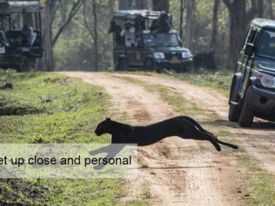 Black Leopard Safari, FiveZero Safaris