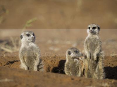 Permalink to The Kalahari Safari in South Africa