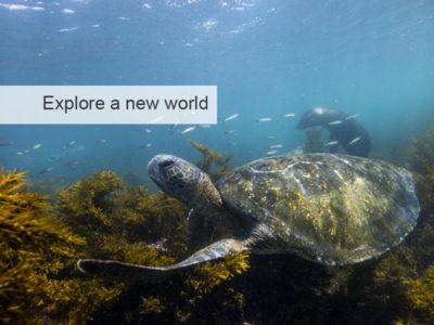 Galapagos Islands Safari, five zero safaris